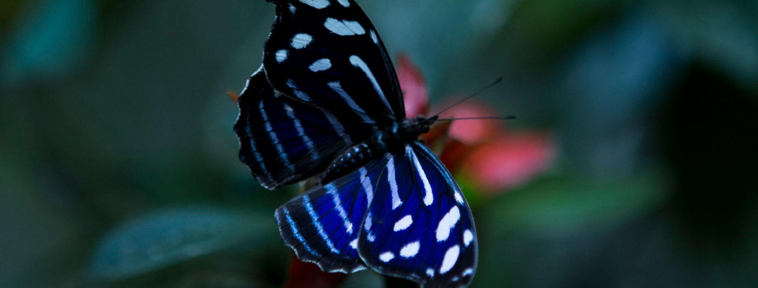 Butterfly Garden, Serpentarium & Frog Exhibit