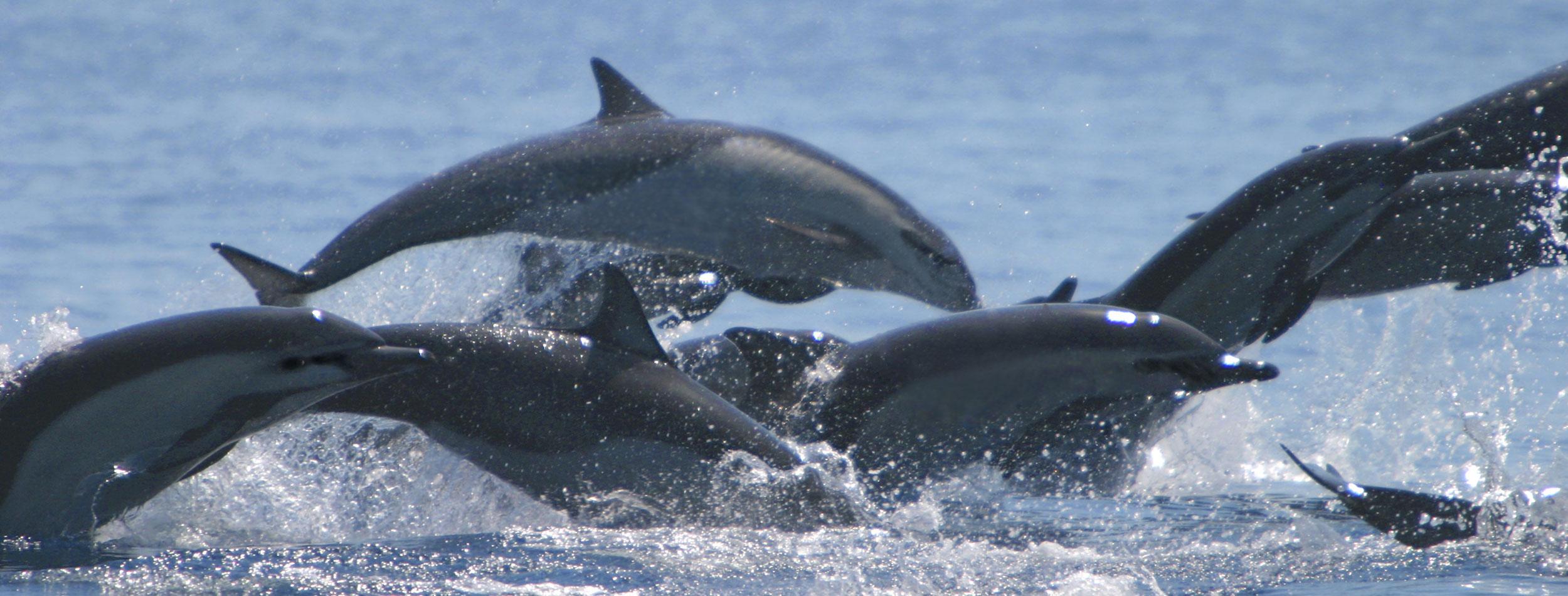 Dolphin Sightseeing & Snorkeling