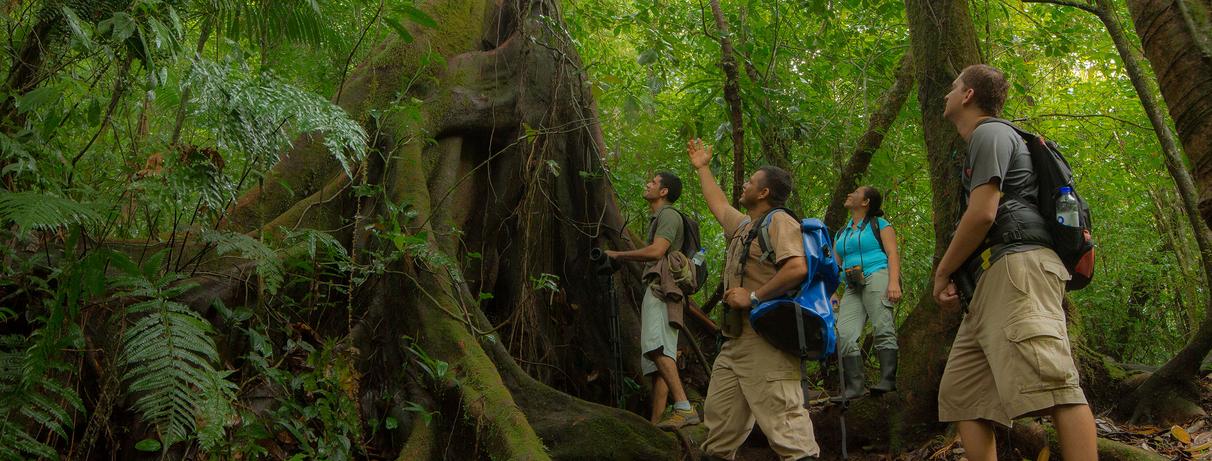 Guided Tour to Monteverde Reserve